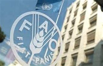الفاووالبنك الدولي يناقشان تعزيز الاستثمار في الأمن الغذائي بمصر بمشاركة المصيلحي والبنا ونصر