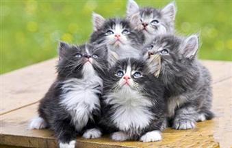 لماذا تم الحجر على مئات القطط في نيويورك؟