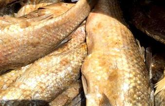 ضبط 62 كيلو رنجة وفسيخ و120 عبوة مواد غذائية وغازية فاسدة بمطروح