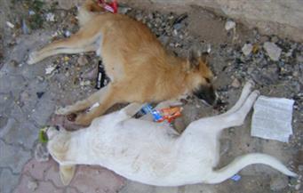 حجز دعوى وقف قتل كلاب وقطط الشوارع للحكم