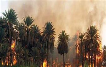 السيطرة على حريق في زراعات النخيل بأسوان