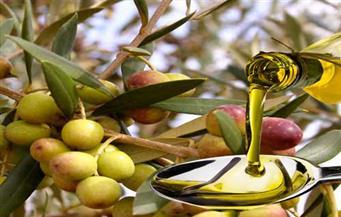 مصر الثانية عالميا بعد أسبانيا في إنتاج زيت الزيتون المعالج للاحتباس الحراري
