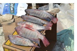 الحكومة تنفي إصابة أسماك البلطي بالميكروبات والديدان نتيجة تغذيتها على الأعلاف الفاسدة