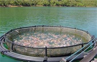 المشروع القومي للاستزراع السمكي بكفر الشيخ