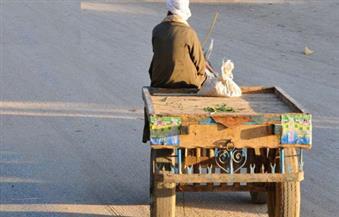 """حي السلام أول يواصل حملات مصادرة """"الكارو"""" تنفيذًا لمبادرة محافظة القاهرة"""