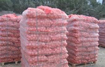 رئيس الحجر الزراعي: فتح الأسواق التركية أمام البصل المصري