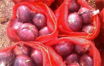الزراعة: لا تراجع في صادرات البصل المصري