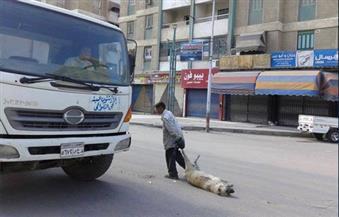 حملات لمكافحة الكلاب الضالة بالدقهلية بعد عقر 3 أشخاص بكفر الجنينة