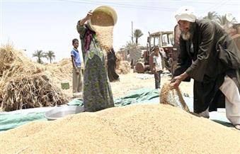 الزارعة: سعر توريد القمح لن يقل عن العام الماضي