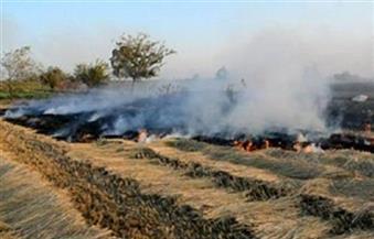 البيئة تحرر 1500 محضر لحرق قش الأرز فى الغربية