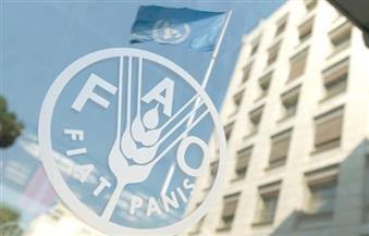 """""""فاو"""": ارتفاع أسعار الحبوب وهبوط السكر والخضراوات عالميا خلال مايو الماضي"""