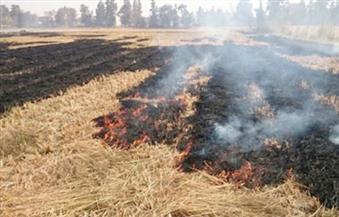 """""""البيئة"""" تنظم سلسلة ندوات للحد من حرق مخلفات الذرة بأسيوط"""