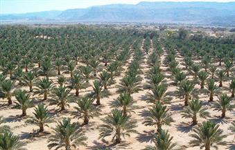 160 مزرعة نخيل في سيوة تحصل على الشهادة الأوروبية للزراعة العضوية