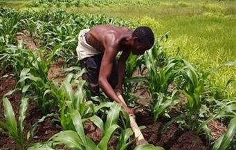 """زامبيا تنجح في """"ثورتها الخضراء"""" وتتحول من مستورد إلى مصدر للذرة"""