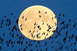 """شاهد..17 صورة لظاهرة """"القمر العملاق"""" من مختلف بلدان العالم"""