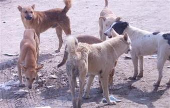 محافظ القاهرة يطالب مديرية الطب البيطري بالبحث عن أساليب جديدة لإبادة الكلاب الضالة