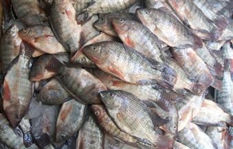ضبط 7 أطنان سمك بلطي غير صالحة للاستهلاك الآدمي ببلطيم
