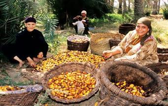 """على هامش قمة المناخ بالمغرب: عرض تجربة """"سيوة"""" في تطوير زراعات النخيل والحفاظ على طابعها المعماري"""