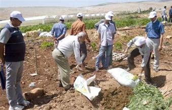 دورة تدريبية للمزارعين على كيفية زراعة محصول بنجر السكر عالي الجودة بالفيوم