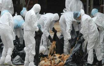 إعدام 92 ألف ديك رومي في ألمانيا بسبب أنفلونزا الطيور