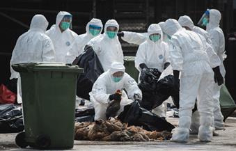 """القضاء على بؤرة  لمرض """"إنفلوانزا الطيور"""" في المنوفية"""