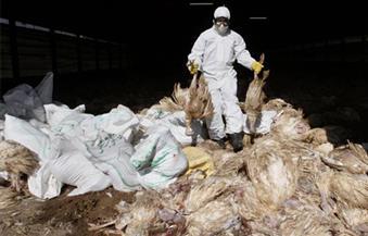 فى مهمة استثنائية.. جيش كوريا الجنوبية يشارك في إعدام الدجاج
