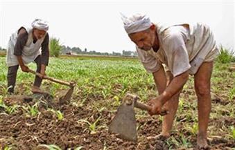 نقيب الفلاحين: انتظروا نكسة للزراعة المصرية بمنع مزارعي قنا من صرف أسمدة المحاصيل الشتوية