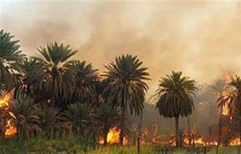 حريق في عدد من أشجار معهد البحوث الزراعية في كوم أمبو