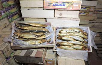 ضبط مصنع بدون ترخيص بداخله 2 طن و600 كيلو رنجة فاسدة بكفر الشيخ