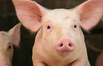 الصين تعلن إعفاء لحوم الخنازير والصويا الأمريكية المستوردة من الرسوم الجمركية