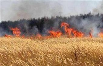 السيطرة على حريق التهم 20 قيراط  قمح  بقرية الرويهب بسوهاج