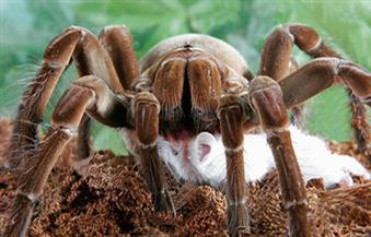 """العلماء يكتشفون حقائق جديدة ومذهلة عن """"العناكب"""""""