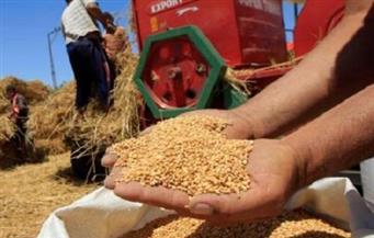 توريد 123690 طنا من محصول القمح في الفيوم