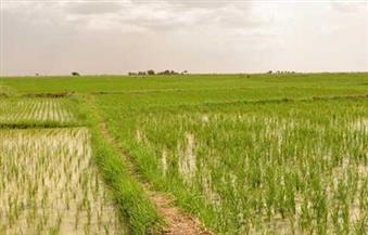 لجنة الزراعة تطالب بتحديد جهة الولاية لـ 200 ألف فدان