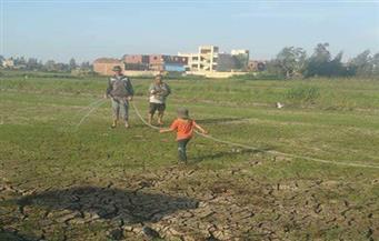 الشرقية تستغيث.. مزارعو الأرز يلجأون للري بمياه الصرف الملوثة لإنقاذ أراضيهم من البوار