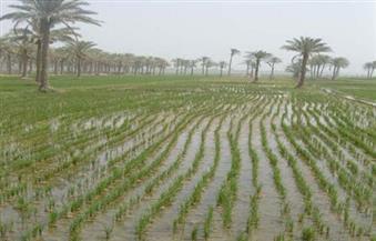 دورة تدريبية حول أفضل المعاملات الزراعية للأرز الأقل استهلاكا للمياه