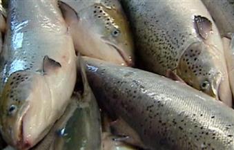 النرويج تطلق أول مزرعة سمكية غاطسة لتعزيز إنتاج أسماك السلمون | فيديو
