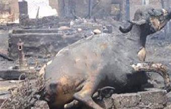 السيطرة على 3 حرائق بكفرالشيخ ونفوق 10 رؤوس ماشية في حريق مزرعة بدسوق