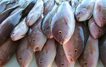 ضبط 220 كجم من أسماك البقرة السامة في حملة تموينية على أسواق الإسكندرية
