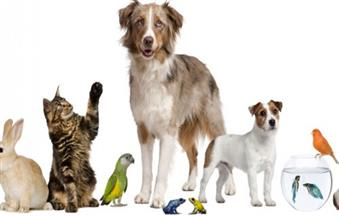 """""""ألف باء حيوانات أليفة"""".. دعوة للرفق بالحيوان فى ساقية الصاوي"""