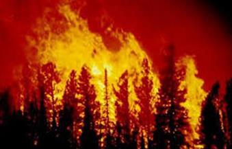 السيطرة على حريق التهم فدانًا من الغابات الشجرية بسوهاج
