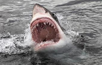 إغلاق شاطئ في أستراليا بعد هجوم سمكة قرش على راكب أمواج