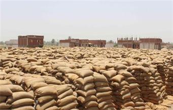 وزارة التموين: توريد 2.2 مليون طن قمح محلى حتى الآن