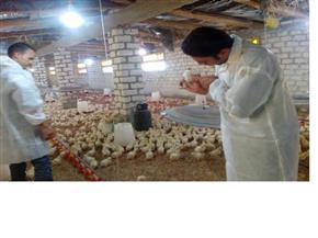 حملات بيطرية وتموينية على محلات بيع اللحوم والجزارة في المقطم والمطرية