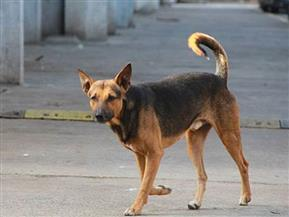 كلب ضال يعقر 14 طفلاً بمنطقتي الصيفية ودرب الطباخين بالفيوم