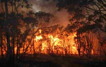 تشيلي تعلن حالة الطوارئ بسبب حرائق غابات ضخمة