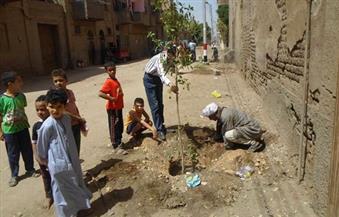 """بالصور.. طلاء 1800 متر """"بلدورات"""" وزراعة أشجار بمشاركة 45 شابًا وفتاة فى أبوتيج"""
