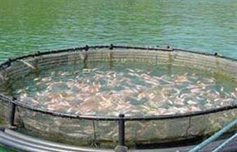 الثروة السمكية: مصر تحتل المرتبة السادسة في مجال استزراع الأسماك عالميا