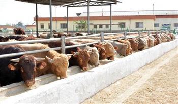 تحصين 404 رءوس ماشية من الحمى القلاعية والجلد العقدي بالوادي الجديد