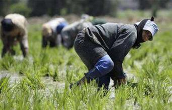 الرقابة الإدارية بكفرالشيخ تبحث استعداد المحافظة لبدء موسم توريد الأرز
